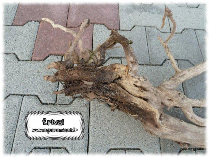 Branches ou racines prises dans la nature astuces et for Ou trouver de la terre de jardin