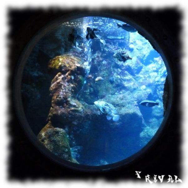 Aquarium de la Réunion à Saint Gilles
