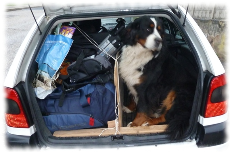 coffre-xsara-bouvier-gros-chien_09.jpg