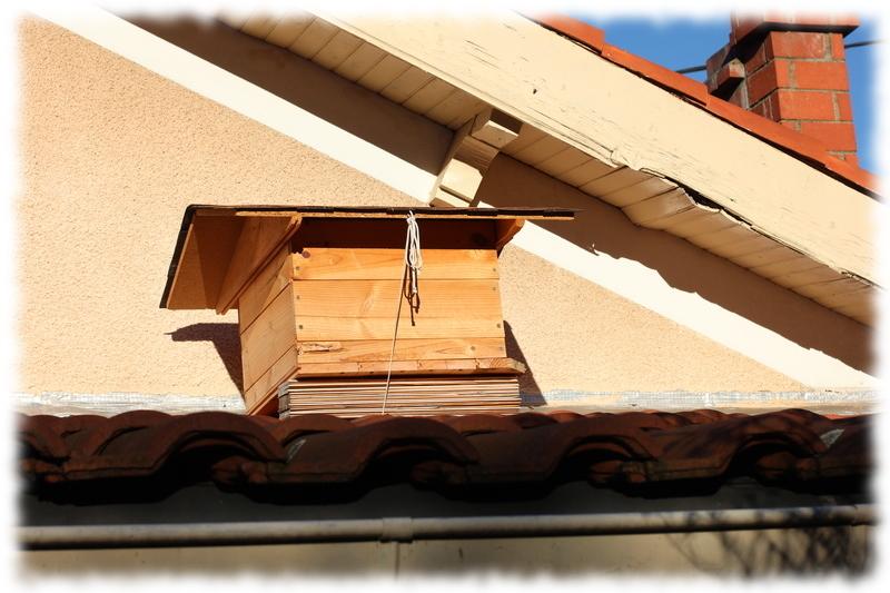 toit-ruche-12c_4.jpg