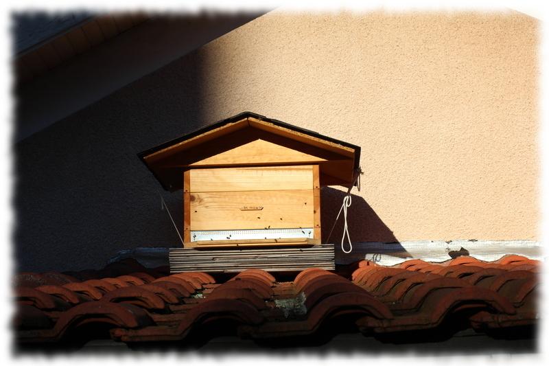 toit-ruche-12c_5.jpg