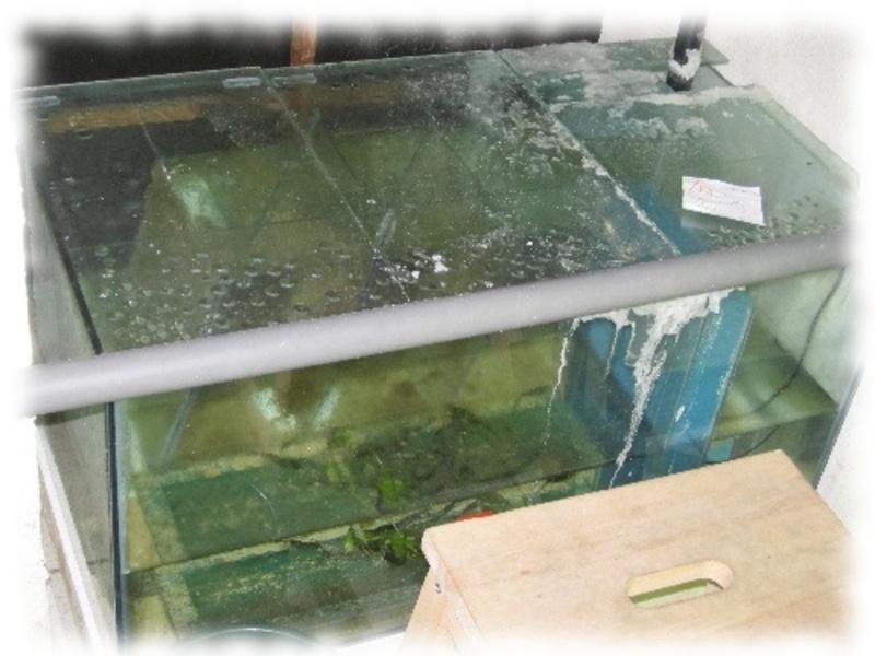 filtration d cante pompe filtre exhausteur air astuces et bricolage fiche et. Black Bedroom Furniture Sets. Home Design Ideas