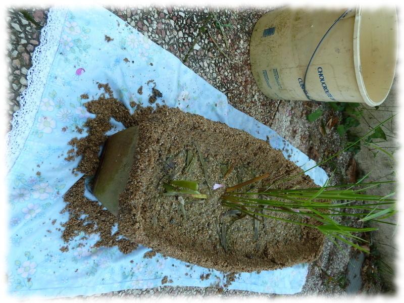 jardiniere-bassin_1.jpg