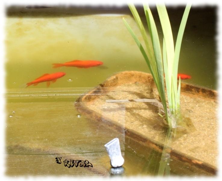 Bassin hors sol exemple de construction astuces et for Bassin pour poisson rouge