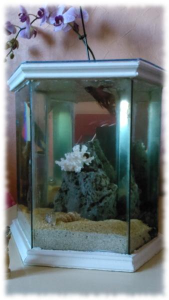 serre à cactus transformée en aquarium