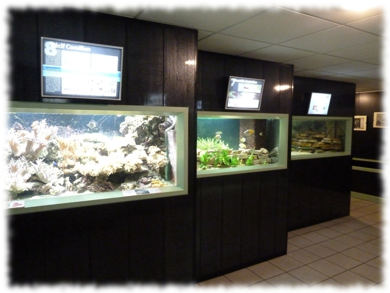 """aquarium saint chamond aquaramiaud espace neruda pablo"""