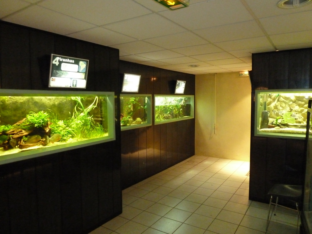 Aquarium Club Association de St Chamond - L'Aquramiaud - Aqua42