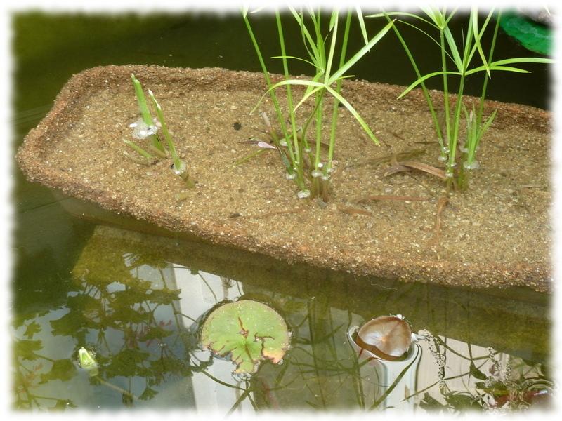 jardinière pour bassin hors-sol