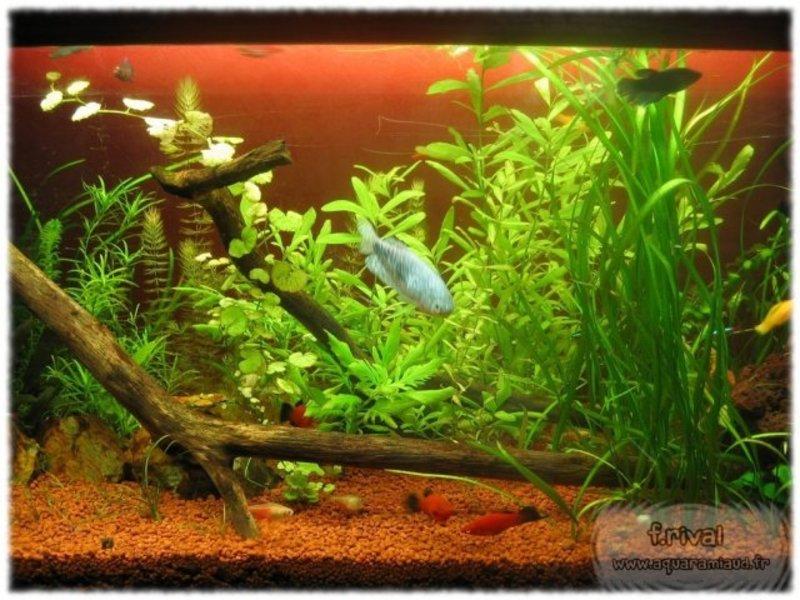 sol technique aquarium