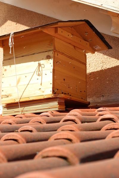 abeilles archives l 39 aquaramiaud. Black Bedroom Furniture Sets. Home Design Ideas