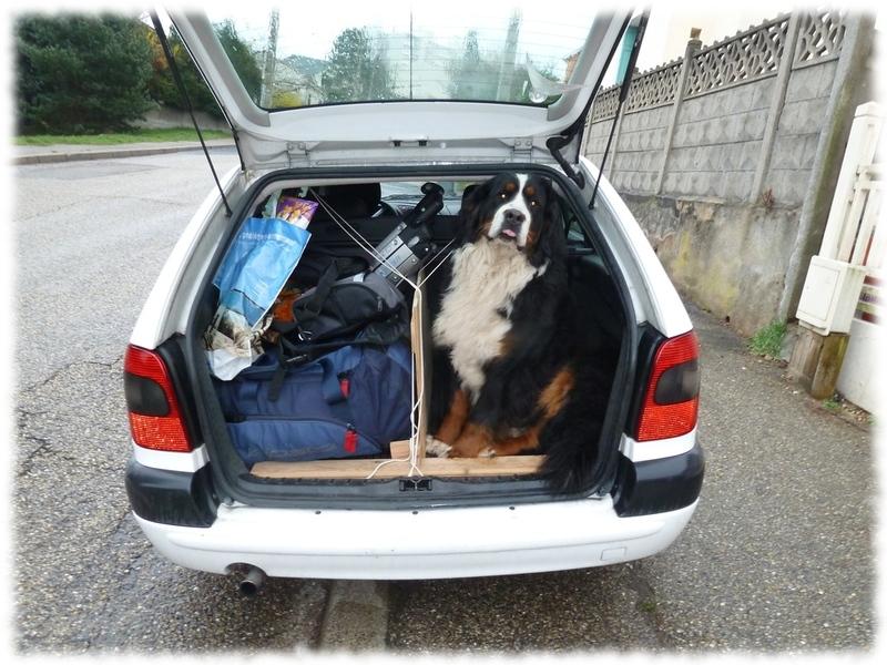 séparation pour chien dans un coffre