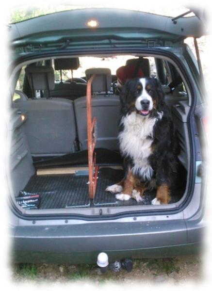 séparation coffre pour grand chien et bagages