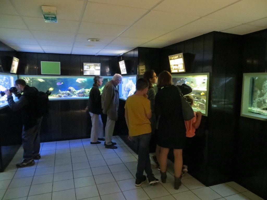 Photos des aquariums
