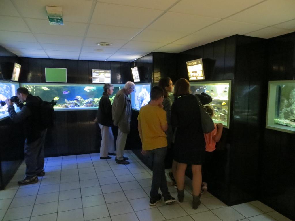 Aquarium de Saint Etienne