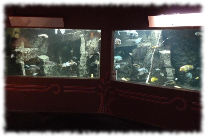 Aquarium des tropiques à Allex - Drôme (26)