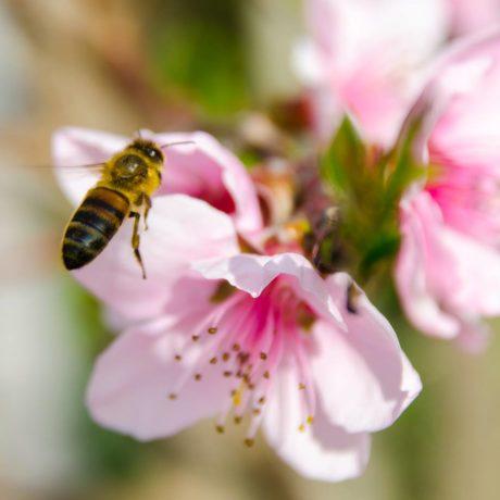 Blog et Astuces en apiculture