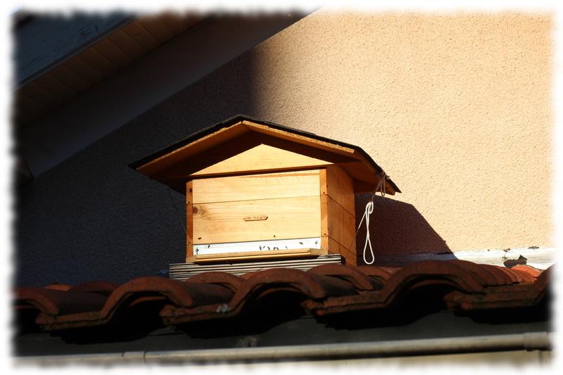 Distance à respecter pour installer une ruche dans son jardin