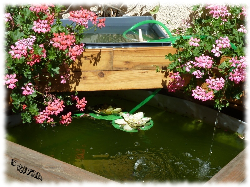 Mon bassin hors-sol de 800L Bassin3